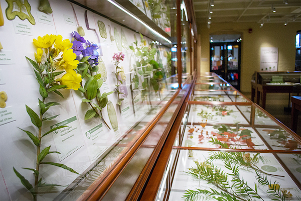 Brightly lit flat museum display cases displaying glass models of flowers