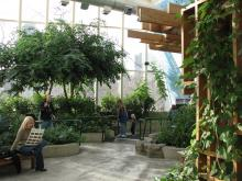 Visitors examining an indoor garden with trees and other plants.