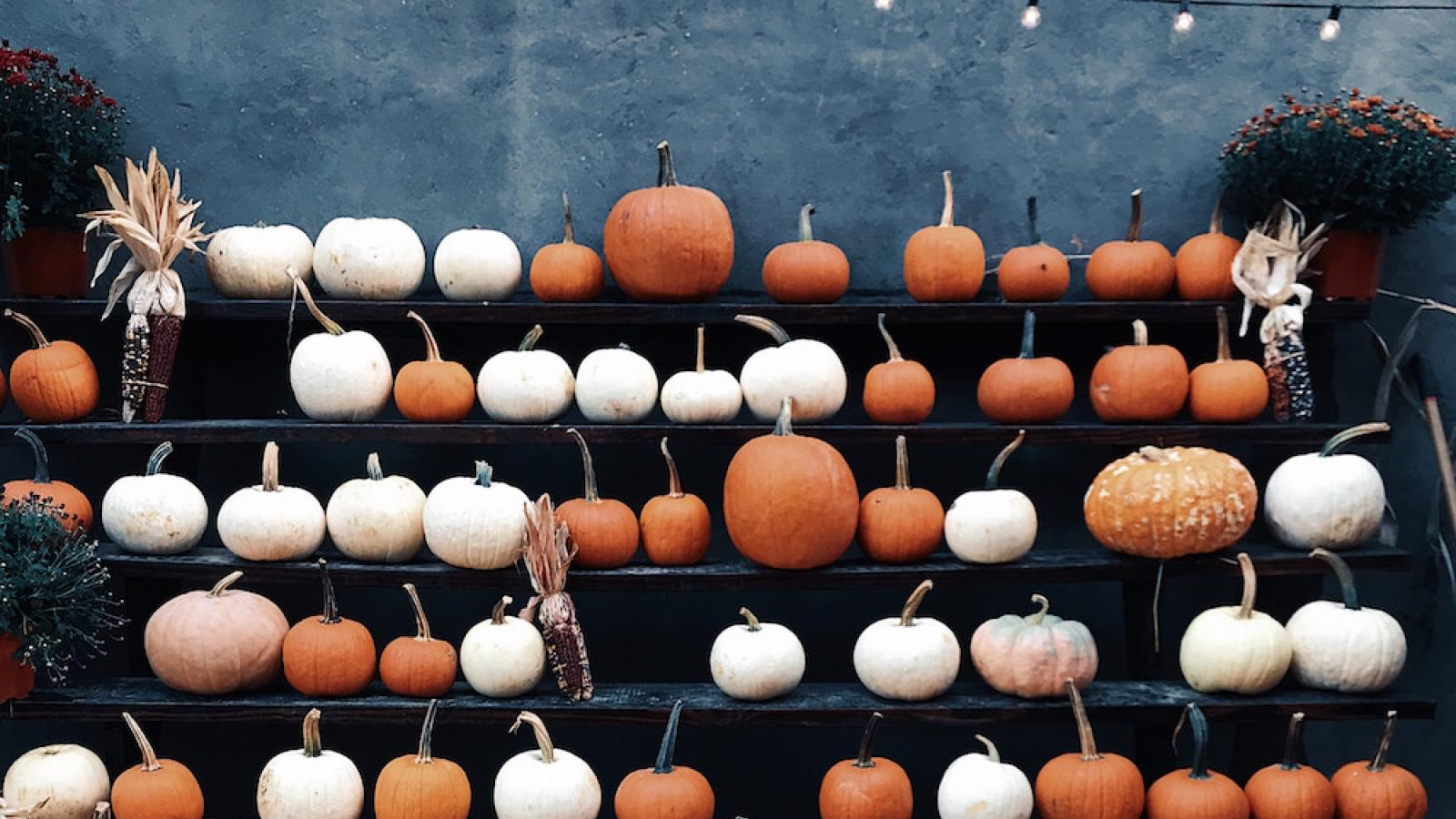 rows of brown and white pumpkins on a stand and on the ground in front of the stand